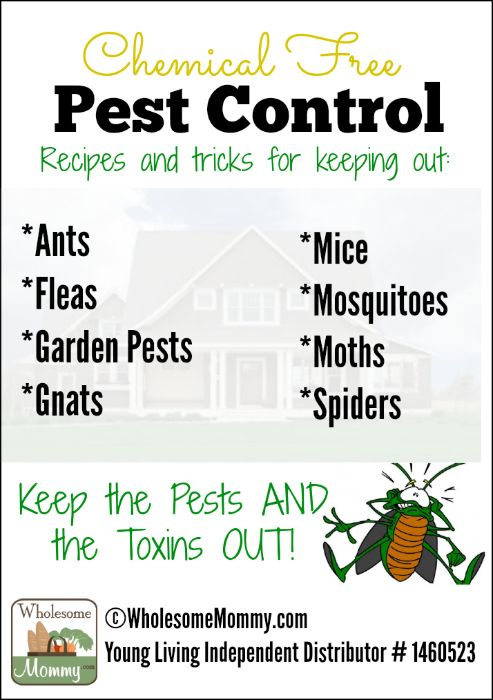 Natural Amp Chemical Free Pest Control From Wholesomemommy