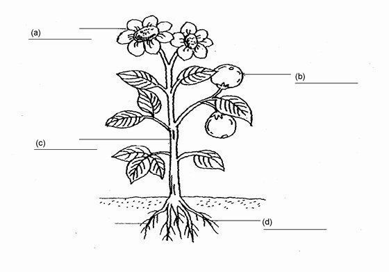 Parts Of A Flower Coloring Page Elegant Label Plant Parts Worksheet Sketch Color Color Coloring E Parts Of A Flower Parts Of A Plant Flower Coloring Pages