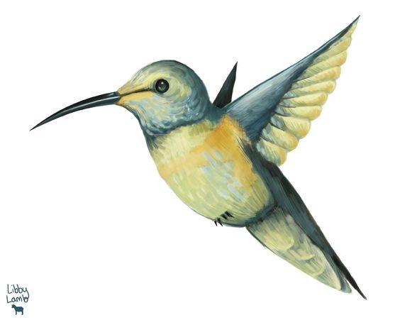 hummingbird drawing - Buscar con Google
