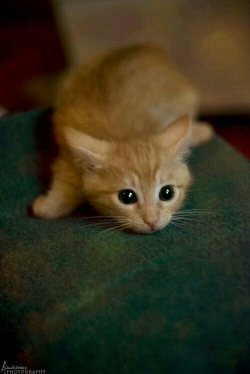 This kitten is just too cute!
