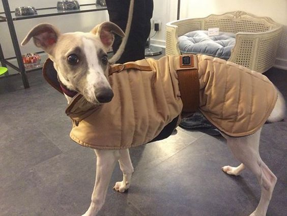 Coat by Milk and Pepper