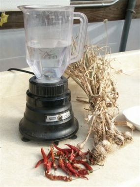 Garlic and Chile Insecticidal Soap Spray. See how to make this at http://www.vegetablegardener.com/item/7076/garlic-and-chile-insecticidal-soap-spray