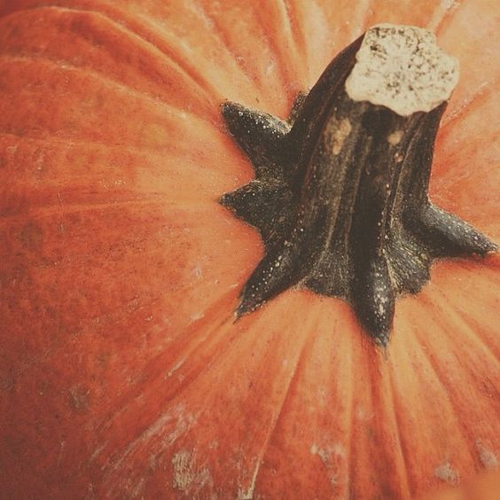 Pumpkin by @mattknisely • Instagram