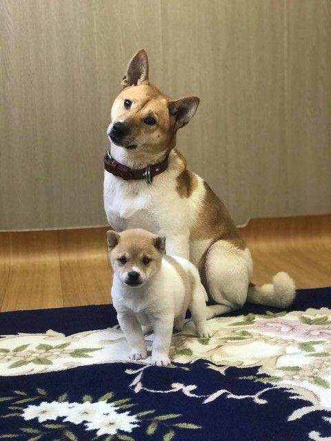 マザーとポリスの命よ繋がれ 熊本県動物愛護センターの現場から 動物 子犬 動物愛護