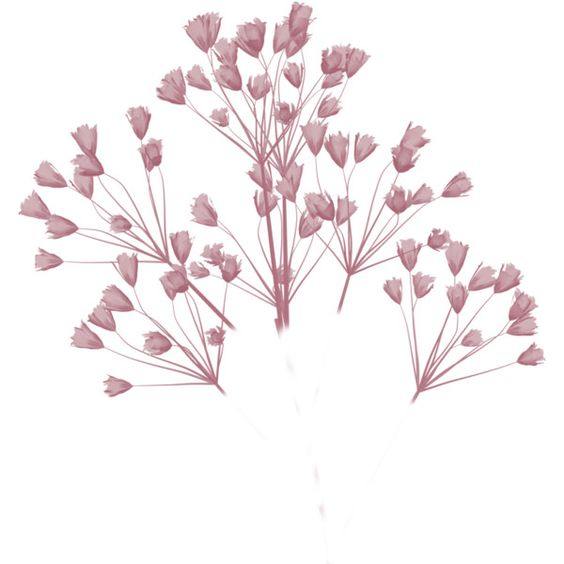 granny art baby's breath ❤ liked on Polyvore featuring flowers, backgrounds, fillers, plants and nature