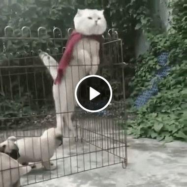 Super gato protege filhotes.