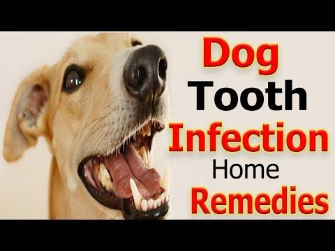 Home Remes For Dog Tooth Infection