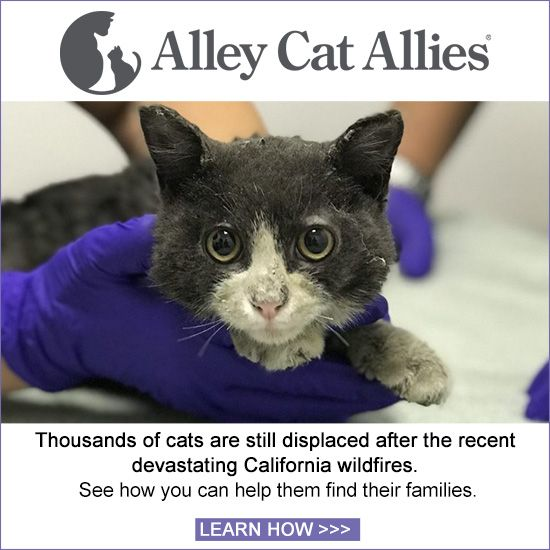 Alley Cat Allies Alley Cat Allies Animal Rescue Site Animal Rescue