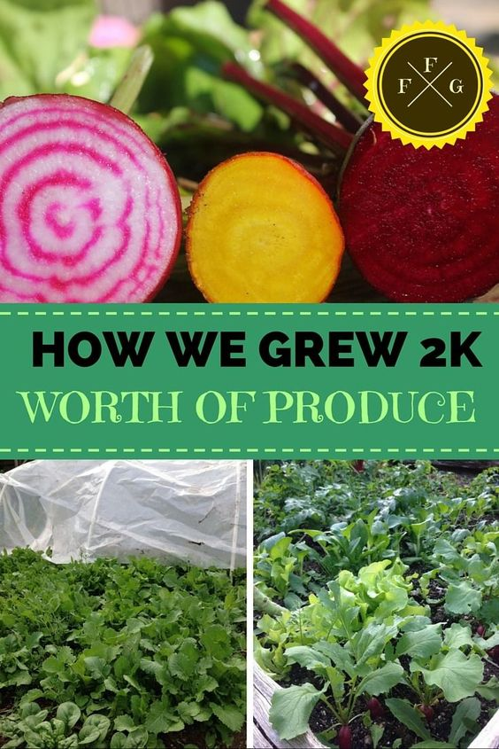 Save money on groceries by growing your own produce