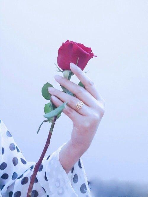 Rose flower hand dp »✿⤠Megoâ¤âœ¿Â«