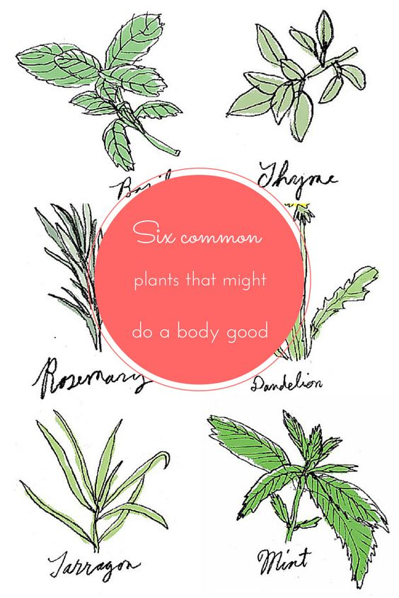 Grow your own herbs for a healthy body, mind and spirit http://lat.ms/1dmzKKL