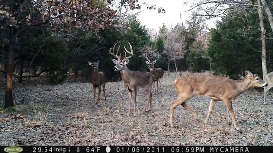 Up 57& off Moultrie trail cams at www.wideopenspaces.com. #hunting