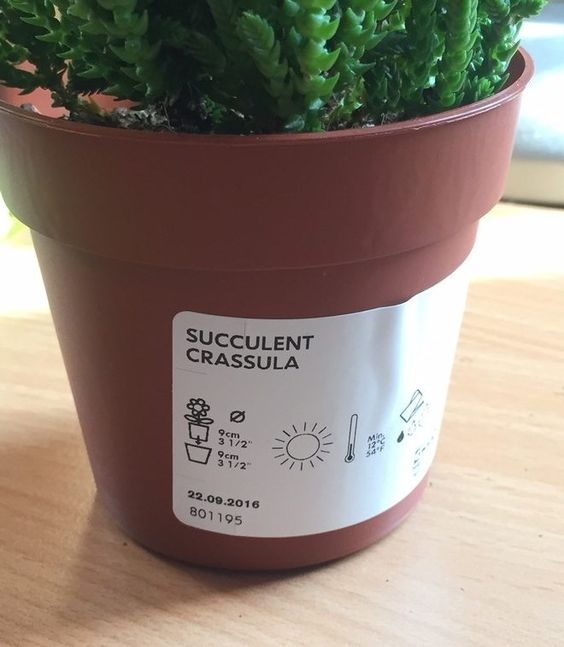 Etiquette Sur Pot De Succulente Ikea Crassula Succulentes