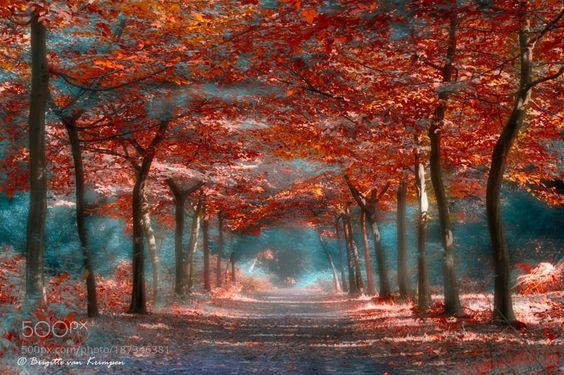 Red Fairyland by bvankrimpen. @go4fotos
