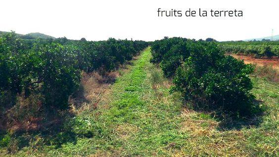 Naranjas en permacultura