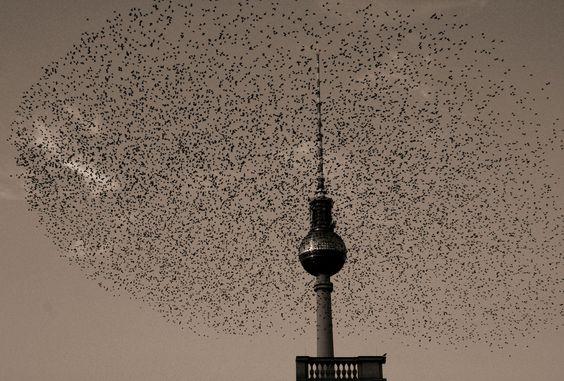 Vogelflug von pinkofien   - Berlin