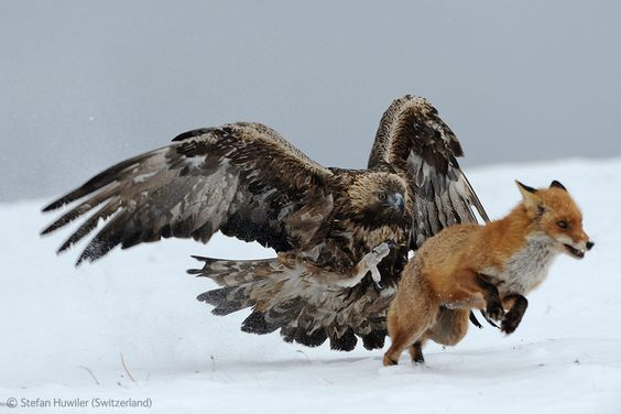 The Year's Most Thrilling (and Heartbreaking) Wildlife Photoshttp://www.pinterest.com/vipinjoc/wildlife-tourisms-save-wildlife