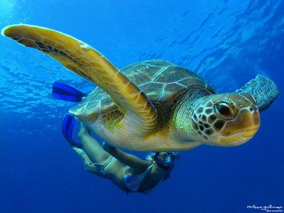 sea turtles are amazing