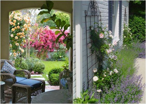 kletterrosen mit pfirsich und rosafarbenen bl ten. Black Bedroom Furniture Sets. Home Design Ideas