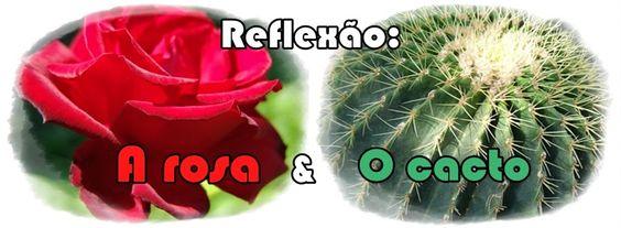 Uma Palavra de Fé: Reflexão: A rosa & o cacto