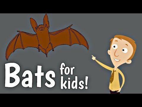 Bats Facts For Kids Animal Learning Youtube Video Homeschool Pop Bat Activities For Kids Bats For Kids Bat Facts