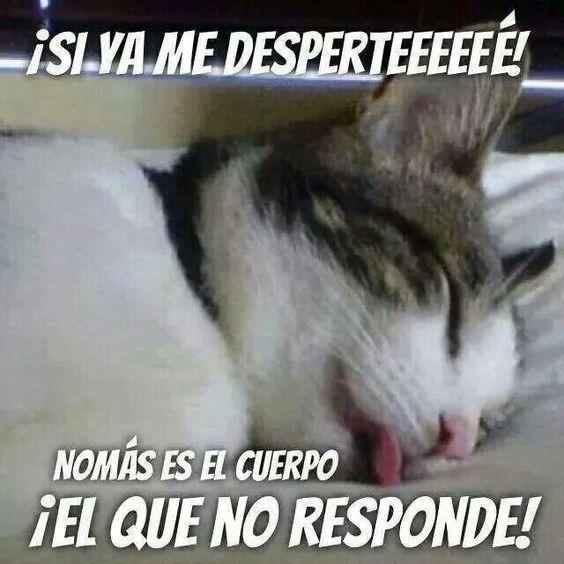 Te entiendo gatito!