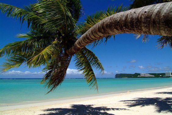ヤシの木とグアムのビーチ