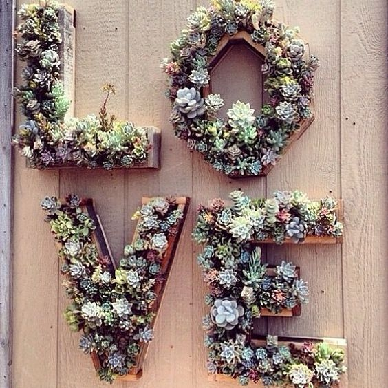 Wall Decorations For Wedding : Succulent wall hanging make this then keep it afterwards