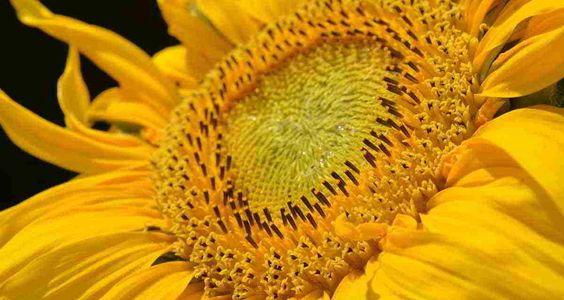 Sognare il colore giallo Significato del giallo nei sogni