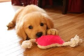 Quer  brincar comigo?