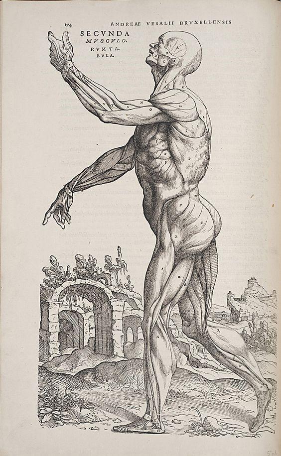 """Resultado de imagen de """"De humanis corporis fabrica"""""""