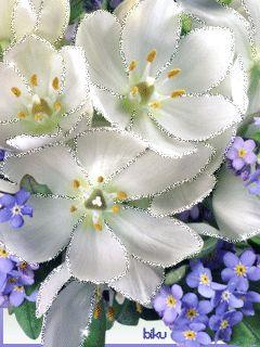 очень красивые цветы - Поиск в Google: