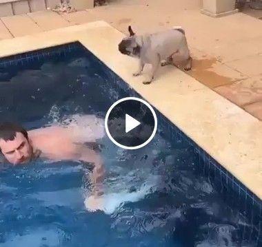 cachorro nadando com seu dono