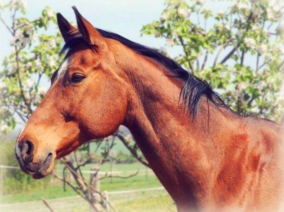 pinturas-paisajes-con-caballos (2)