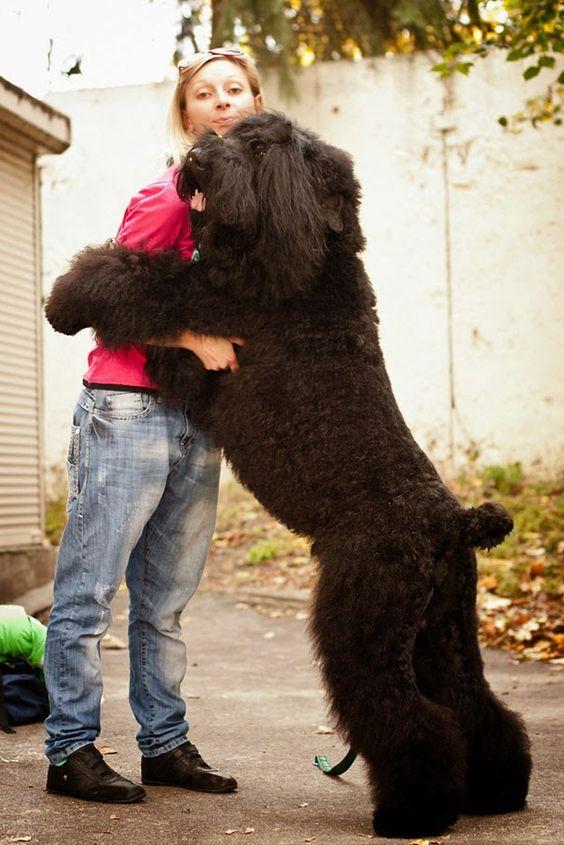 Cães abraçarem os donos (Aviso de fofura!) ~ curiosityFlux
