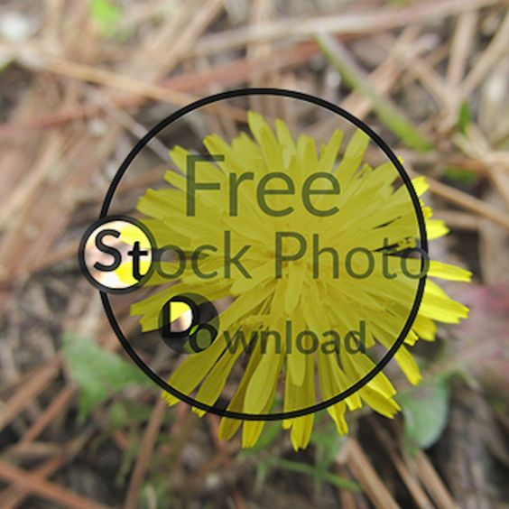 Download Free Photo - Yellow Flower - Wildflower Free and Public Domain Stock Photo Download