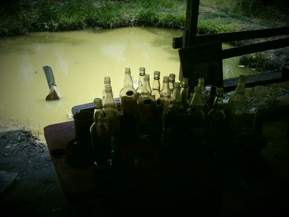 Empty bottles waiting for toddy, a fermented juice from the sap of palm trees