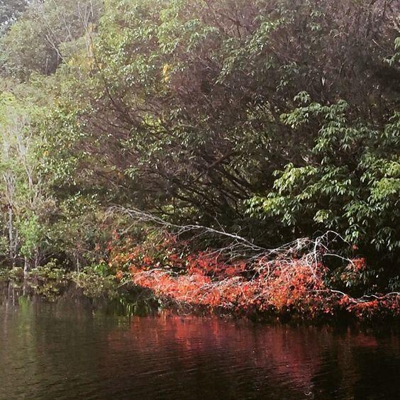 Primavera no Rio Negro, Amazonas, Brasil.