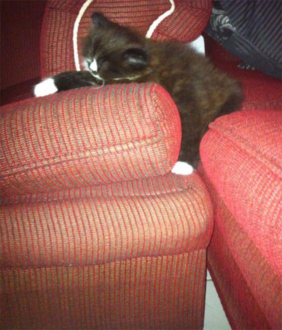gatos-dominando-mundo-33