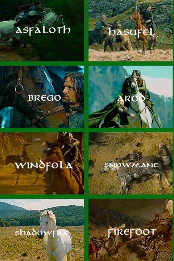 Sadly overlooked in the movies. The steeds of Middle Earth