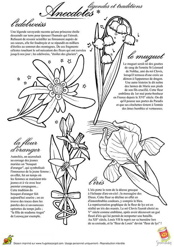Le muguet, l'Edelweis, l'Iris et la fleur d'oranger avec ses anecdotes dans une illustration à colorier