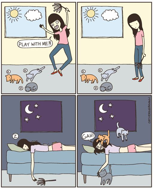 Yeah my cat does this all the time! | Truth - During the day, the cats are generally tame. They just lounge in the sun beams or the book shelves or on my printer.  At night, they are in crazy mode, and they wrestle and roll around and play in their litter box and so on. | @Cat vs Human