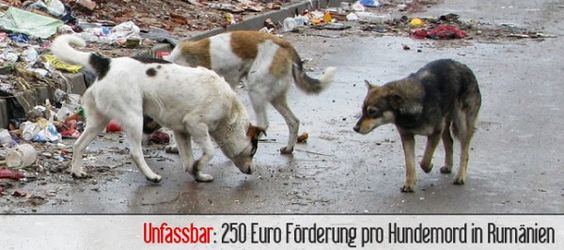 just unbelievable. a sterilization would cost the same! bulgaria, shame on you!