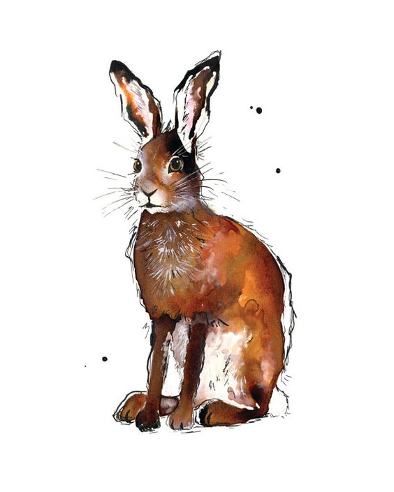 Hare 8 x 10 inch print of original by NatalieIllustrations