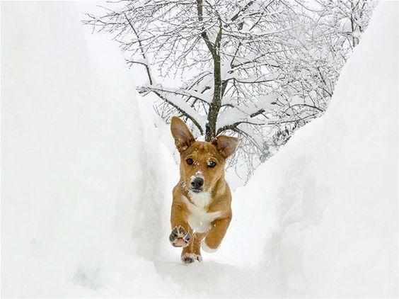 Cachorro se diverte na neve (