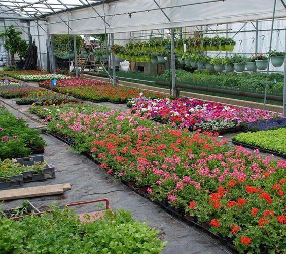 Evrard Horticulture, les légumes de saison
