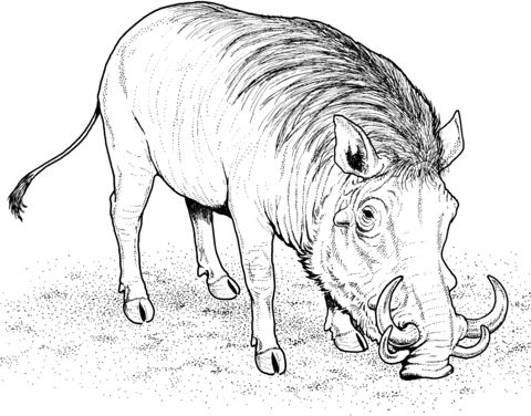 Warthog African Wild Pig Coloring Page Free Printable Coloring Pages Wild Hog Animal Coloring Pages Africa Drawing