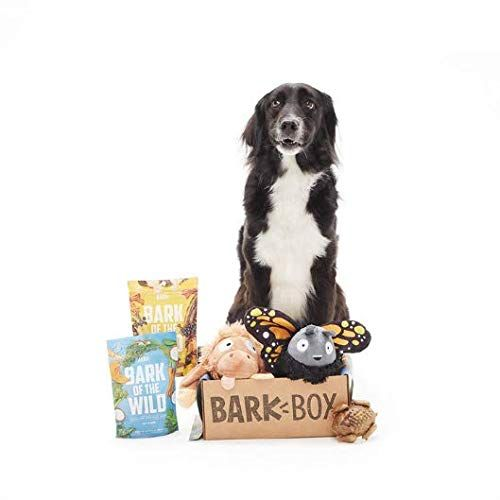 Barkbox Starter Kit Assortment Dog Plush Toys Chew Toys Squeak