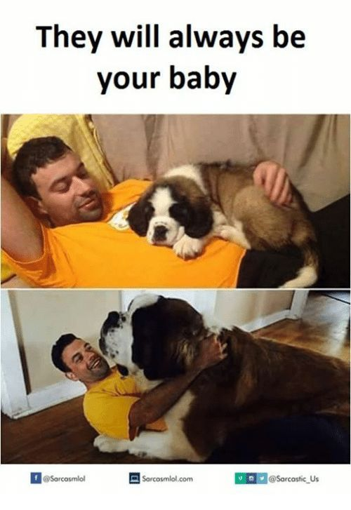 Top 30 Big Dog Memes Funny Dog Memes Big Dogs St Bernard Dogs
