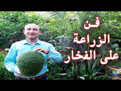الزراعة على الفخار زراعة حب الرشاد على الفخار Planting On Pottery Planting Cress Seeds On Pottery Youtube Fine Gardening Sprouting Seeds Seeds